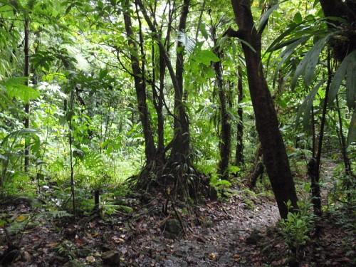 http://en.wikipedia.org/wiki/File:Morne_Trois_Pitons_National_Park,_Dominica_-_jungle.jpg