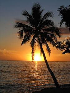 http://commons.wikimedia.org/wiki/File:Sunset_with_coconut_palm_tree,_Fiji.jpg