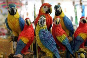 https://commons.wikimedia.org/wiki/File:Sentinel_parrots.jpg