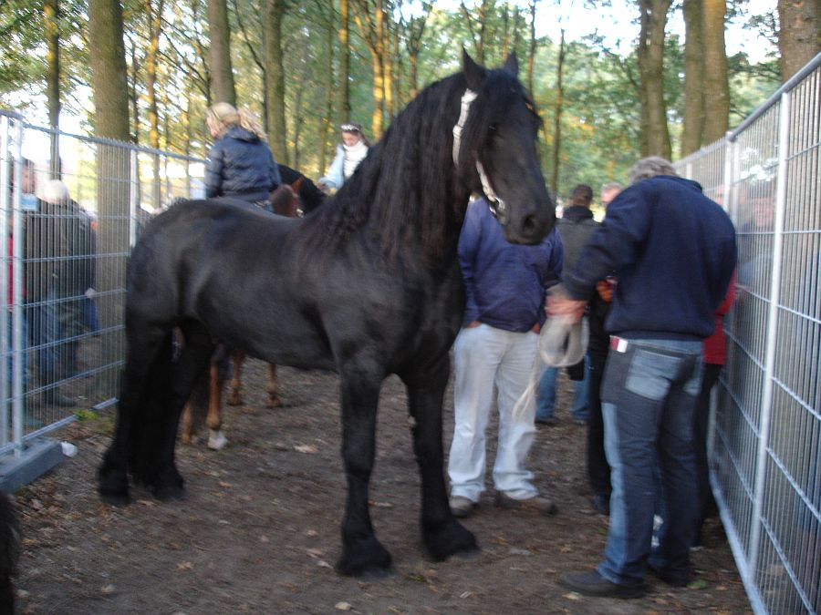 zuidlaardermarkt Horse fair art 25