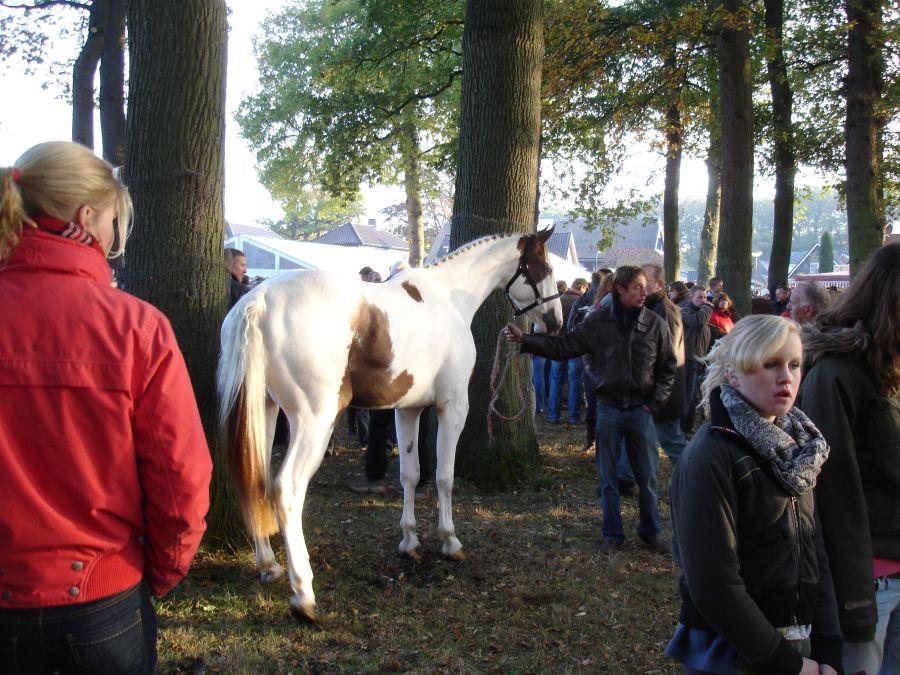 zuidlaardermarkt Horse fair art 28
