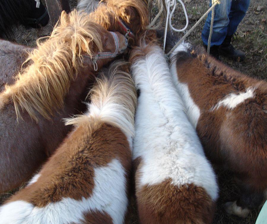 zuidlaardermarkt Horse fair art 31