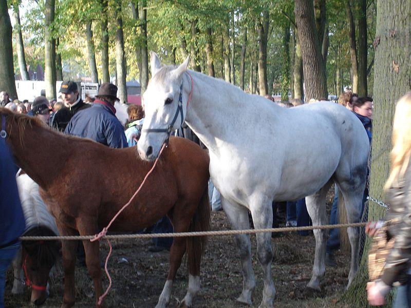 zuidlaardermarkt Horse fair art 33