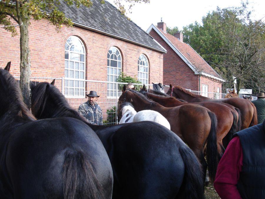 zuidlaardermarkt Horse fair art 42