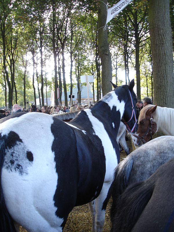 zuidlaardermarkt Horse fair art 59