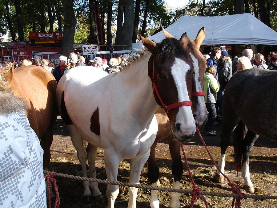 zuidlaardermarkt Horse fair art 62
