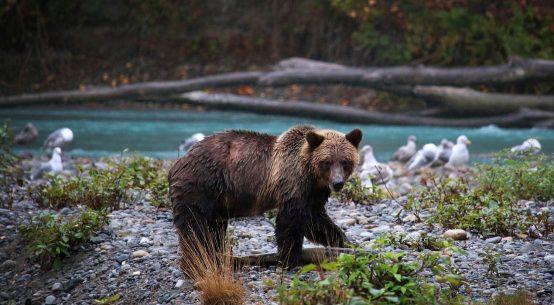 Best Tourist Places for Wildlife Adventures