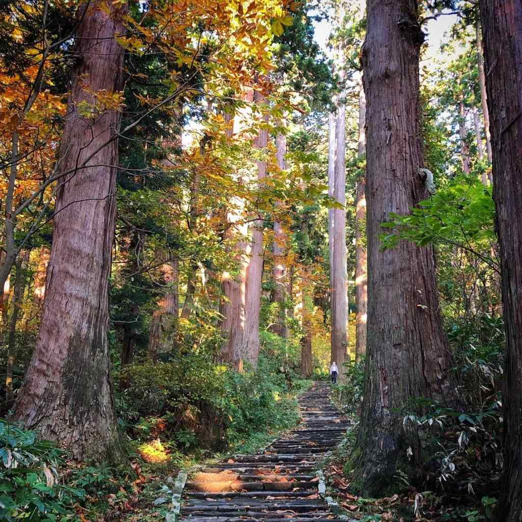 The Cedars of Mt. Haguro in Autumn