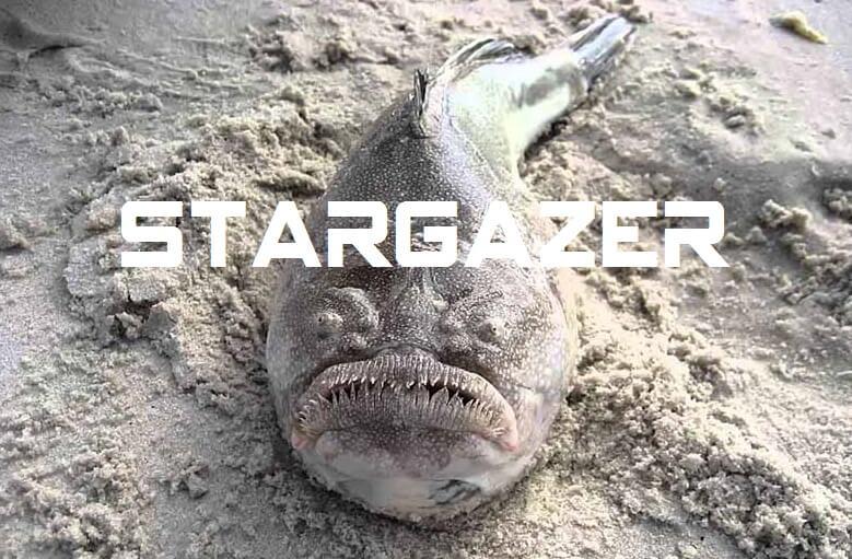 Jenis Jenis Ikan Laut