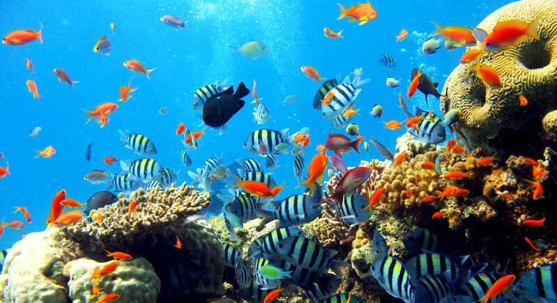 83+ Gambar Alam Lautan Kekinian
