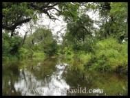 Serene river pool in the Kruger National Park