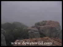 Misty morning