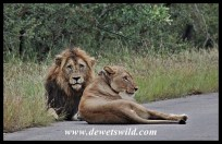 Honeymooners on the road
