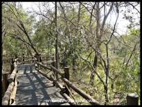 Wetland walkway at Skukuza Nursery