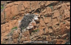 Their nesting site
