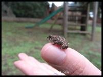 Tiny toadlet