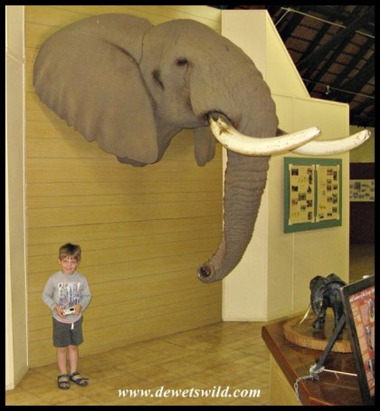 Inside Letaba's Elephant Hall