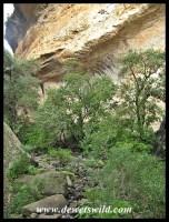 The vegetation gets denser as the ravine's walls come closer