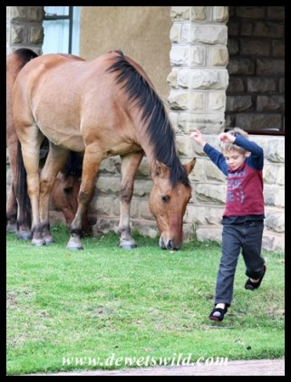 Joubert de Wet, Horse Whisperer