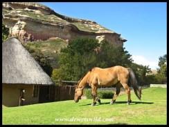 Beautiful horse in a beautiful place