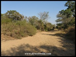 Crossing a dry stream bed