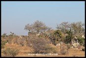 The Sweni area is mostly flat plains, interspersed with a few rocky outcrops