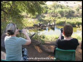 Watching elephants from the Sweni camp
