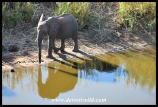 One elephant, or three?