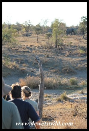 Crossing the Sweni while the elephant moves away