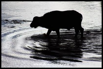 Buffalo river crossing at sunset