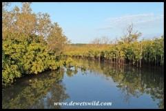 Mangroves lining the lagoon at Umlalazi