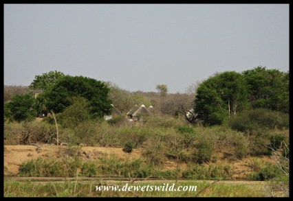 Balule seen from across the Olifants