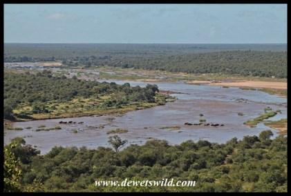 Elephants in the river below Olifants