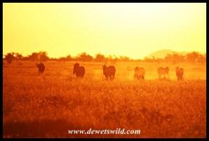 Sunrise at Tinhongonyeni