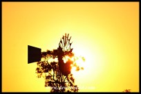 Windpump at sunset