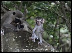The cutest monkey in Hilltop