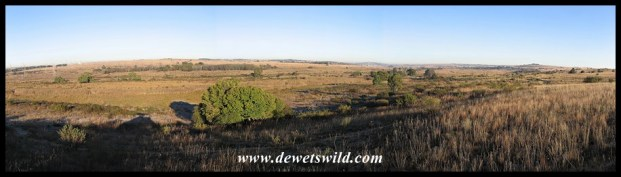 A view over the reedy wetland from which Rietvlei takes its name