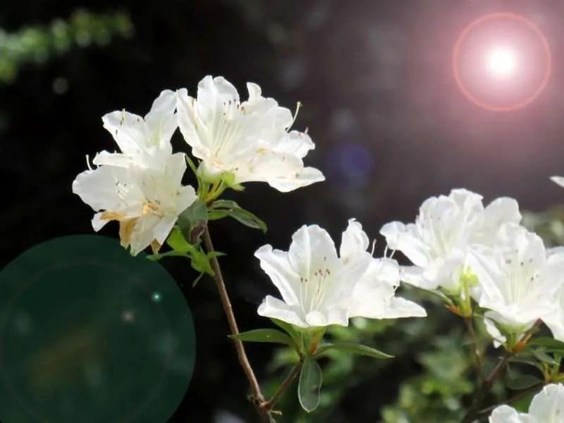 waarom een zonnekap gebruiken