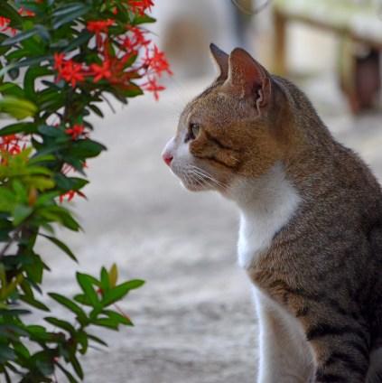 Pose dekat bunga