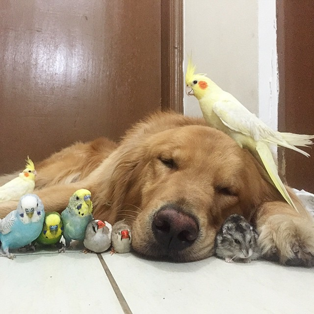A_Dog_8_Birds_And_A_Hamster_Are_The_Most_Unusual_Best_Friends_Ever21