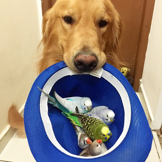 A_Dog_8_Birds_And_A_Hamster_Are_The_Most_Unusual_Best_Friends_Ever15