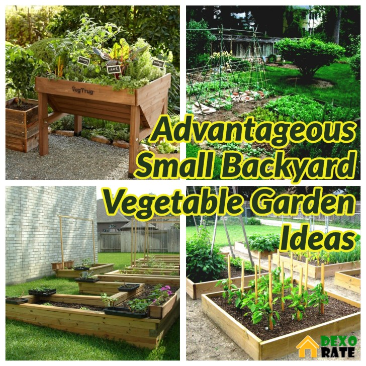 35 Advantageous Small Vegetable Garden Ideas For Your Backyard