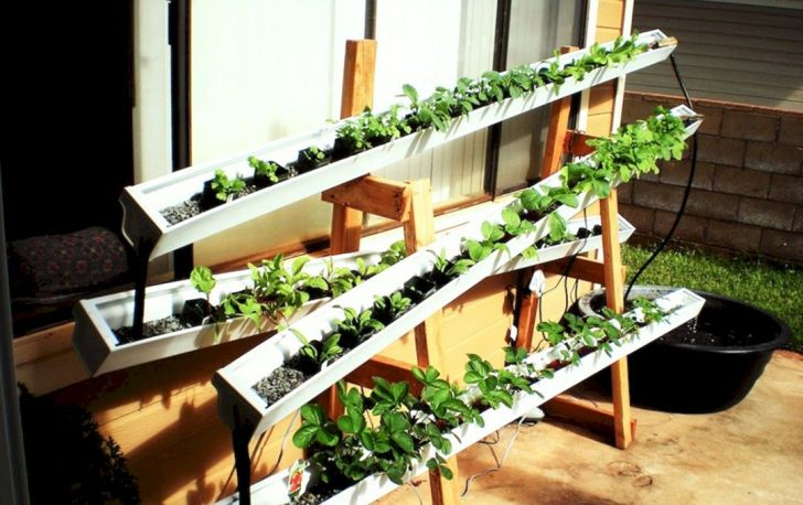 Vegetable Garden With Hydroponic System