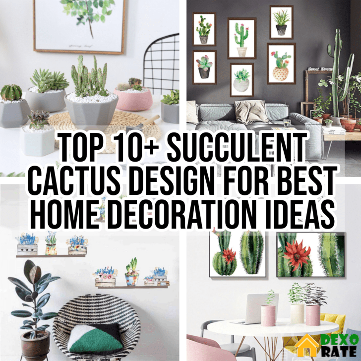Top 10 Succulent Cactus Design For Best Home Decoration