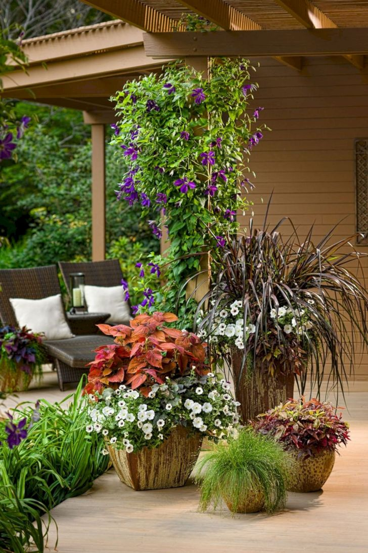 Front Yard With Ornamental Plants Ideas