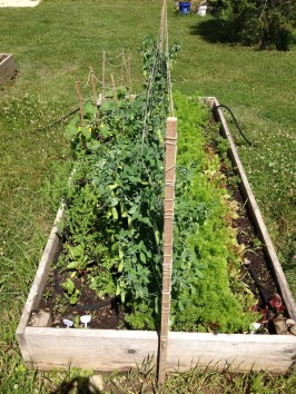 This bed is packed with peas, carrots, salad greens, cucumbers, radishes and more!