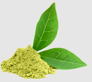Green Tea Extract EGCG