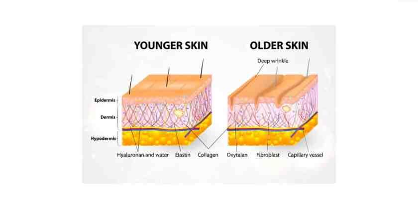 Lumiace eye cream-Skin Types