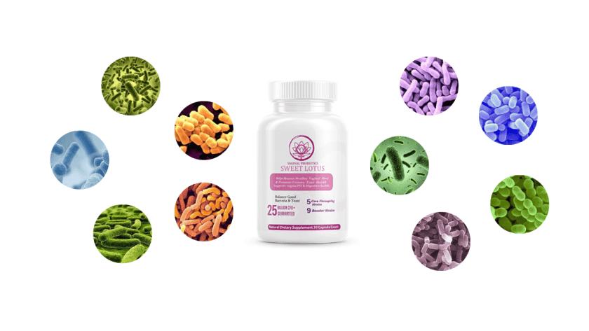 Sweet Lotus Probiotics Ingredients