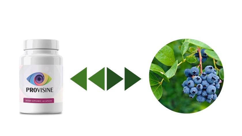 Provisine Supplement Ingredients